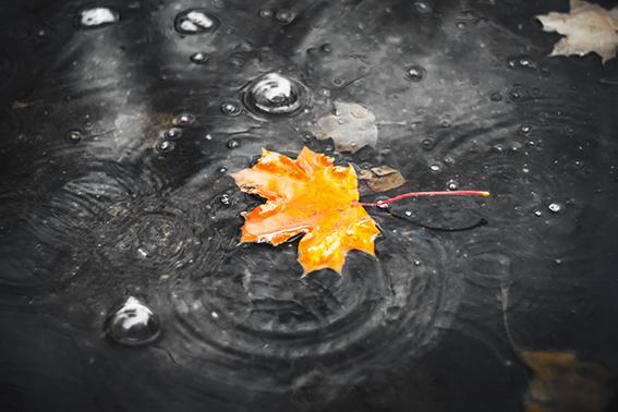 Herbst-Depressionen